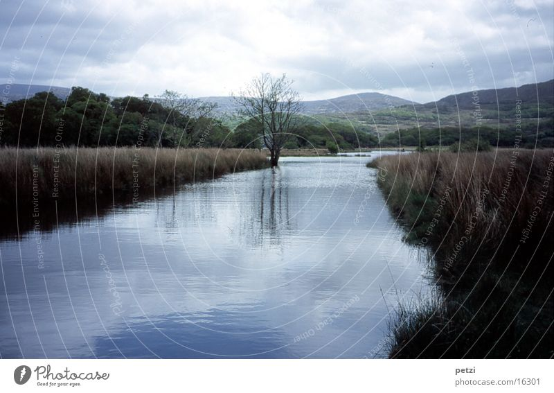 Peaceful landscape in Ireland Brook Tree Green Reflection Clouds reed grass Mountain Blue Cover Idyll Calm