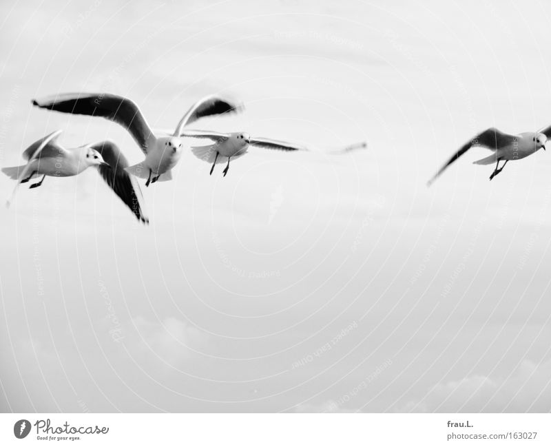 in line Black & white photo Exterior shot Copy Space bottom Day Motion blur Central perspective Looking Vacation & Travel Ocean Animal Sky Baltic Sea Bird Wing
