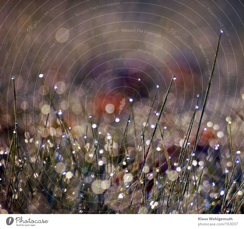Undreamed wealth Dew Water Lawn Grass Sunlight Glittering Reflection Multicoloured Spring Summer Prism Cheerful Macro (Extreme close-up)