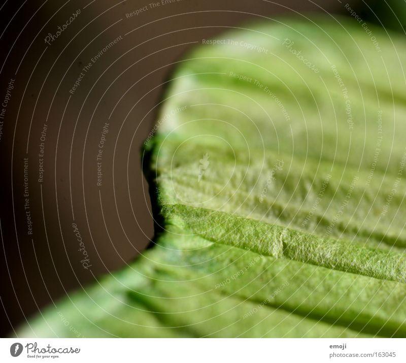 Green Near Stripe Furrow