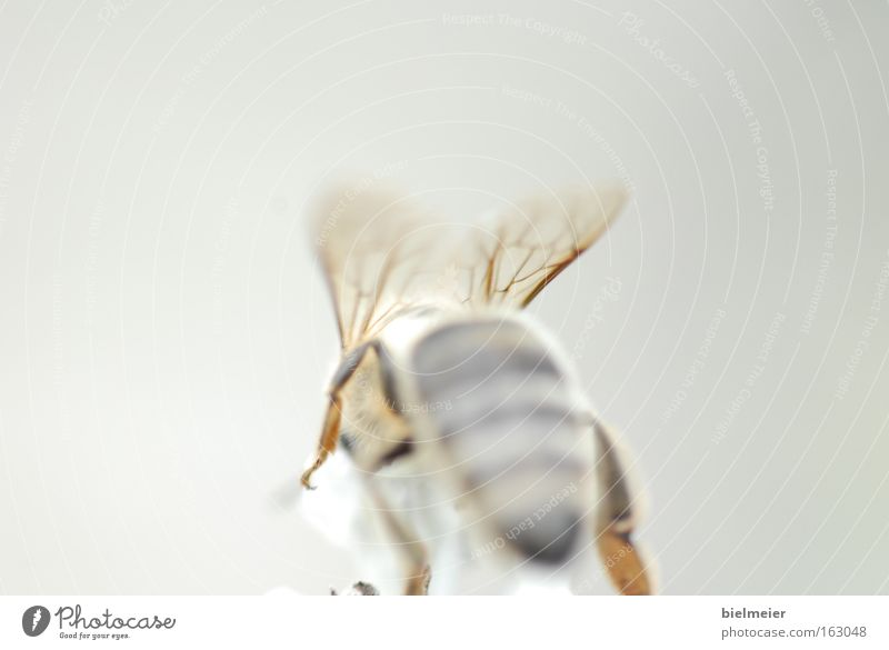 White Sun Summer Joy Yellow Gray Wing Bee Transparent Behind