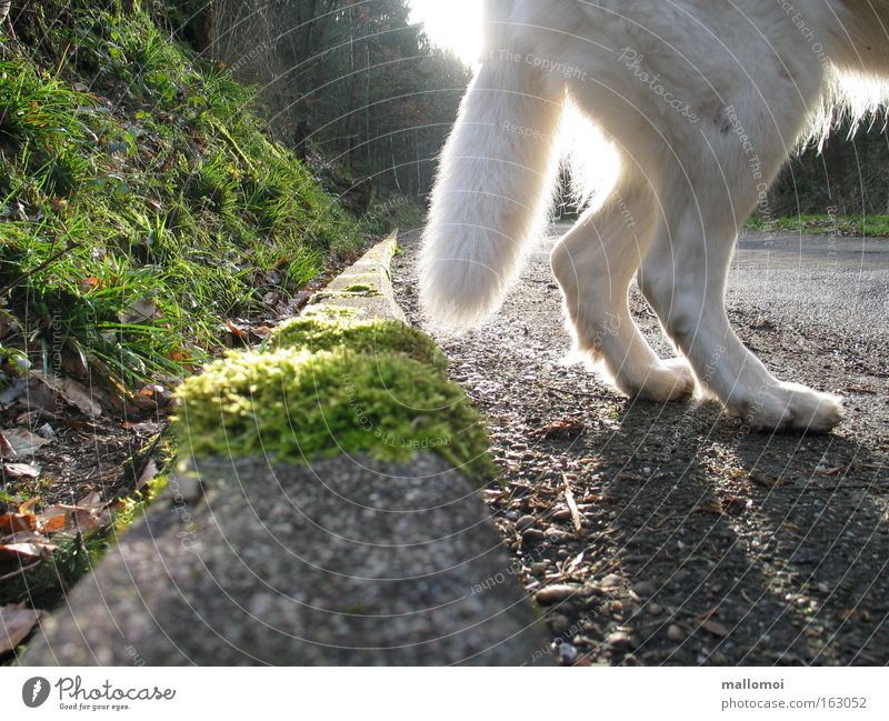 EVERYTHING HAS AN END Bottom Street Paw Going Loneliness Fear Dangerous End Hind quarters Roadside Curbside Gutter Wolf Edge Panic Mammal white shepherd dog