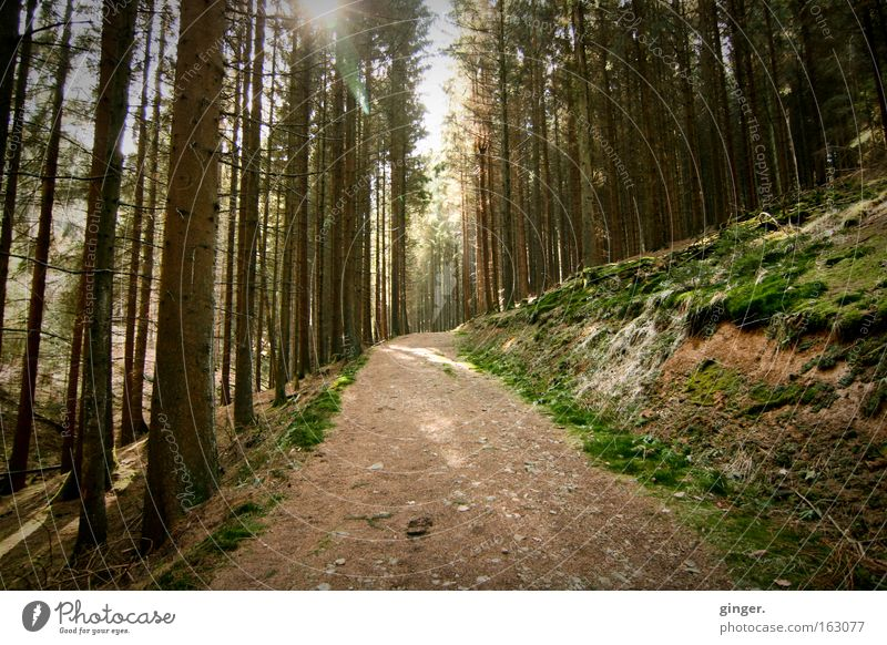 walk in the woods Calm Nature Landscape Plant Earth Spring Beautiful weather Tree Moss Wild plant Forest Hill Lanes & trails Wood Movement Relaxation Growth