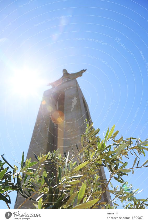 Criso Rei Religion and faith Belief Think Statue Lisbon Jesus Christ Tourist Attraction Tall Height Back-light Sun Bright Brilliant Olive tree Portugal