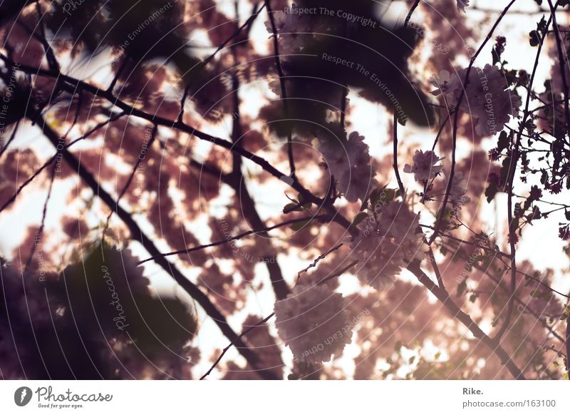 Spring day dream. Colour photo Subdued colour Exterior shot Deserted Day Light Shadow Light (Natural Phenomenon) Sunlight Sunbeam Worm's-eye view Beautiful