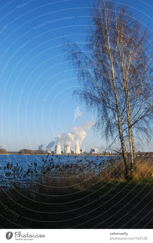 energy landscape Electricity generating station Nature Tree Birch tree Water Lake Landscape Energy industry Idyll Industry Lausitz forest Lignite Cottbus