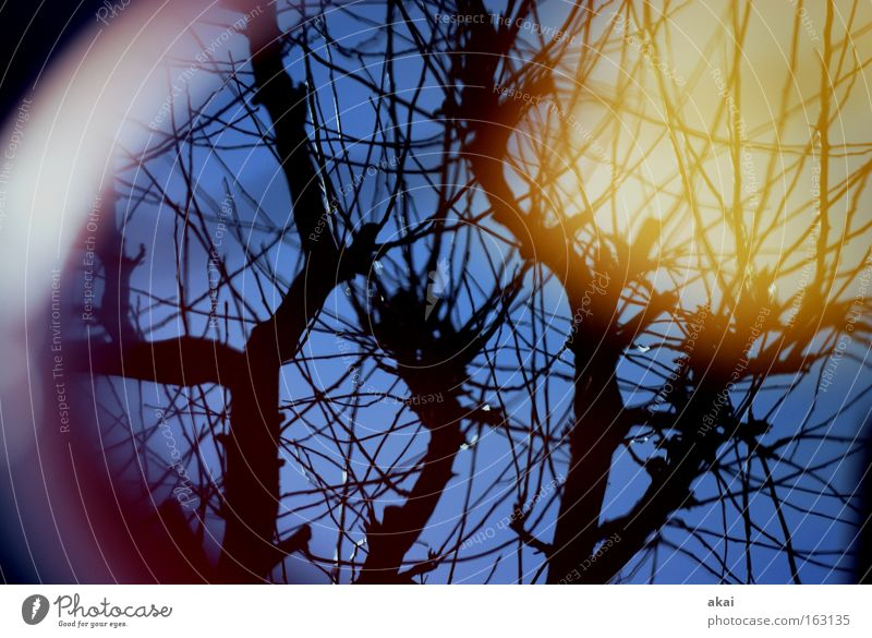 good day sunshine Sky Sky blue Perspective Deciduous tree Tree Apple tree Reflection Corner Round Sun akai mortar bucket