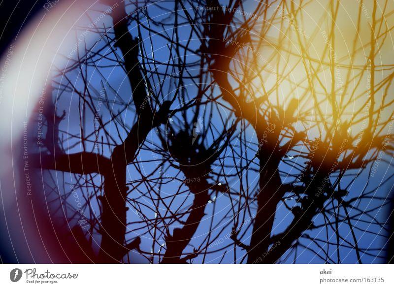 Sky Tree Sun Perspective Corner Round Sky blue Apple tree Deciduous tree
