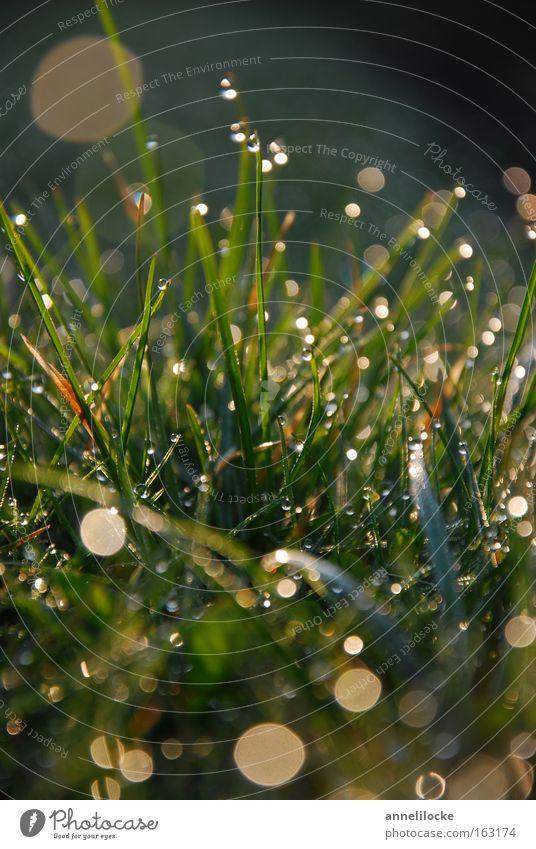 Green Spring Meadow Grass Rain Glittering Fresh Drops of water Wet Lawn Drop Dew Sunrise