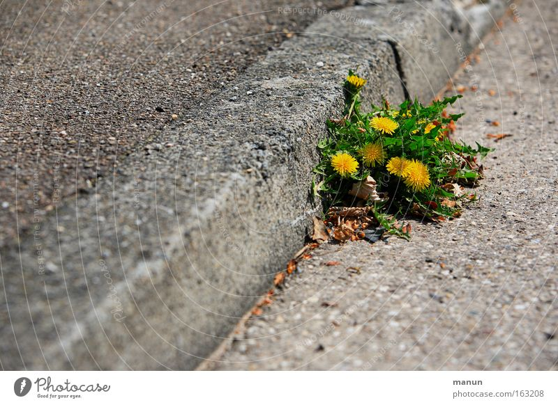 Nature Yellow Street Life Spring Power Road traffic Environment Success Force Growth Multiple Corner Change Asphalt Joie de vivre (Vitality)