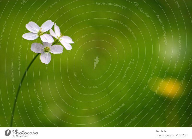 Beautiful Flower Green Meadow Blossom Spring Delicate Stalk Fine Decent Point of light Meadow flower