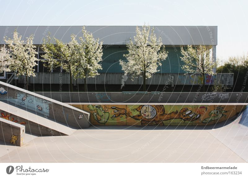 Tree Summer Calm Loneliness Playing Blossom Warmth Spring Concrete Skateboarding Funsport Sports ground