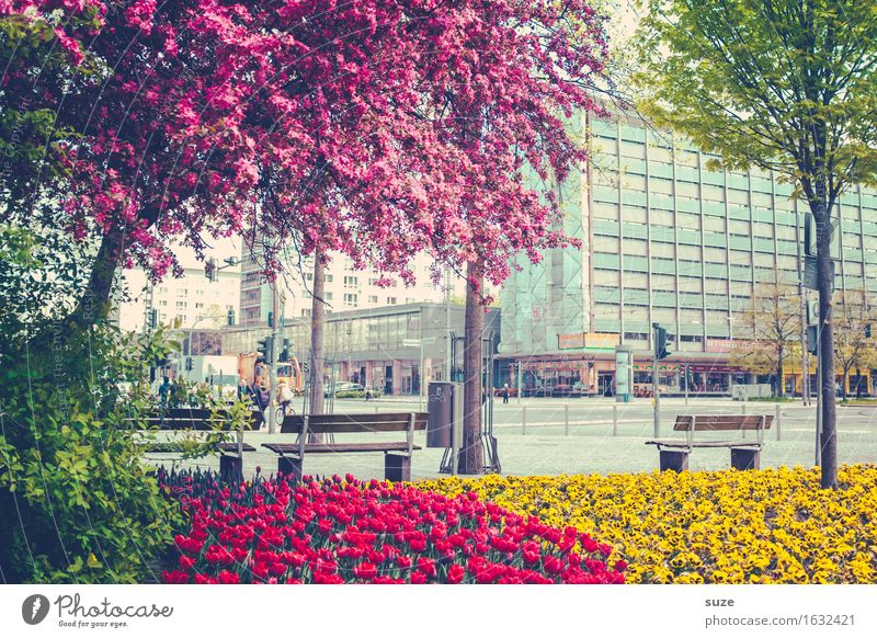 A flourishing city Lifestyle Shopping Fragrance City trip House (Residential Structure) Culture Environment Plant Spring Tree Blossom Town Downtown Places