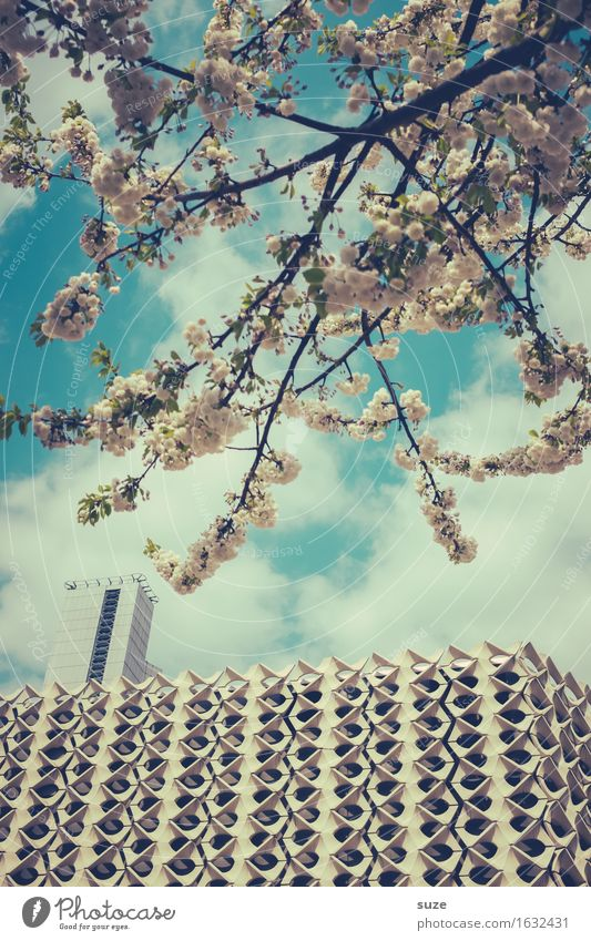 City White Tree House (Residential Structure) Environment Architecture Blossom Spring Building Facade City life Growth Modern Retro Culture Blossoming
