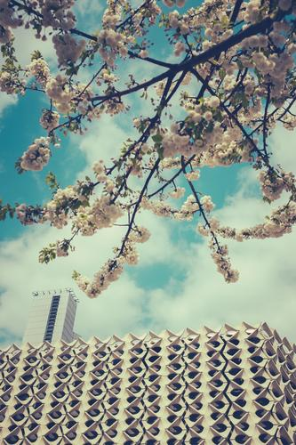 Fragrant city Style Design Fragrance House (Residential Structure) Culture Environment Spring Tree Blossom Town Downtown Manmade structures Building