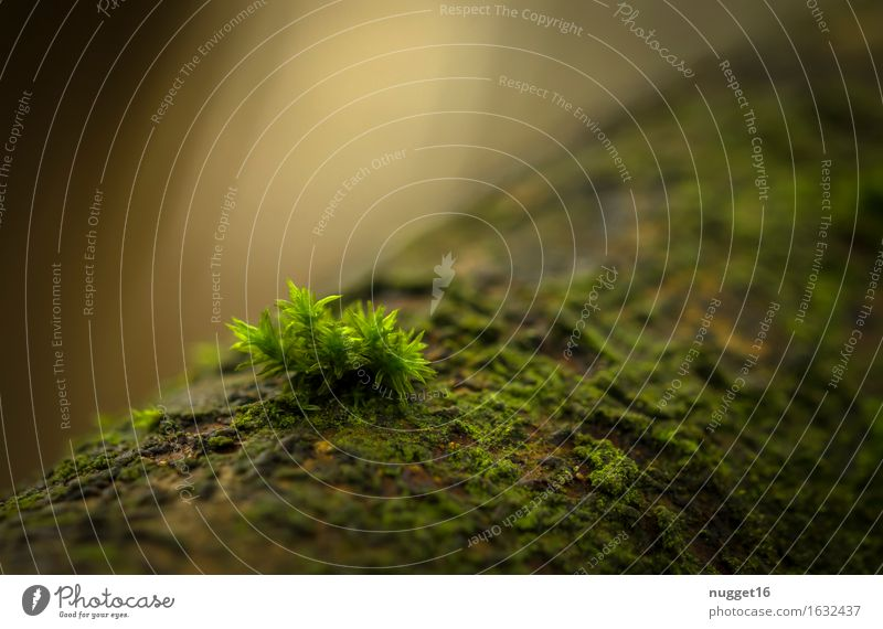the magical power of light Environment Nature Plant Spring Summer Autumn Moss Wild plant Forest Virgin forest Growth Simple Near Natural Beautiful Yellow Green