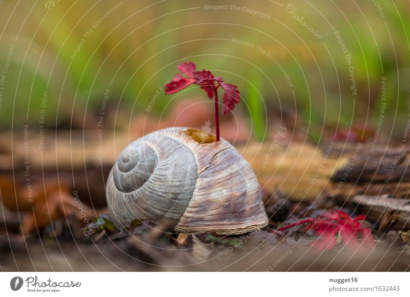 The power of nature Environment Nature Plant Animal Earth Wild plant Park Meadow Field Forest Snail 1 Growth Esthetic Exceptional Brash Near Natural Green
