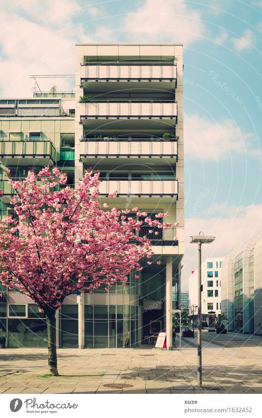 City Tree House (Residential Structure) Environment Architecture Blossom Spring Building Facade Pink City life Flat (apartment) Living or residing Retro