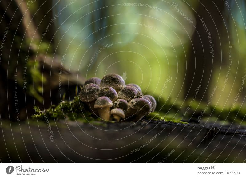autumn mood Mushroom Environment Nature Plant Earth Autumn Beautiful weather Forest Esthetic Near Brown Green Calm Colour photo Exterior shot Close-up Deserted