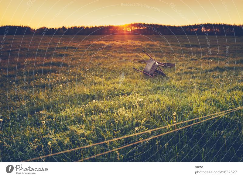 Nature Old Summer Landscape Meadow Grass Moody Field Idyll Transience Romance Past Agriculture Pasture Farm Real estate