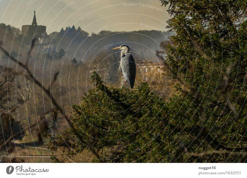 Grey heron in the mountain park Kassel-Wilhelmshöhe Nature Landscape Animal Sky Summer Tree Park Wild animal Bird 1 Moody Contentment Love of animals Beautiful