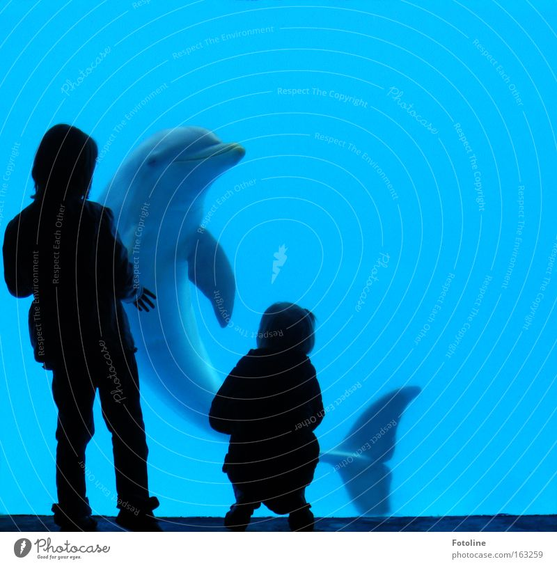 Child Water Ocean Vacation & Travel Animal Grief Spain Captured Mammal Smart Dolphin Whale
