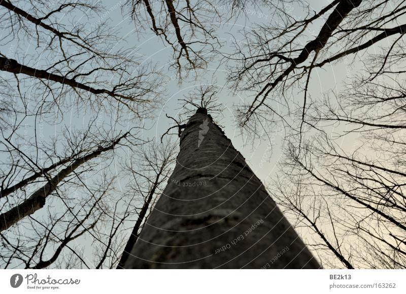 UpTheTree Sky Tree bark Forest Blue Gray Dusk Branch
