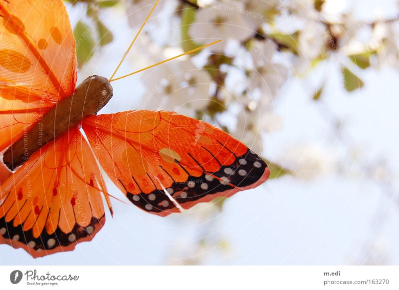 White Spring Bright Orange Delicate Butterfly Cherry blossom Summery