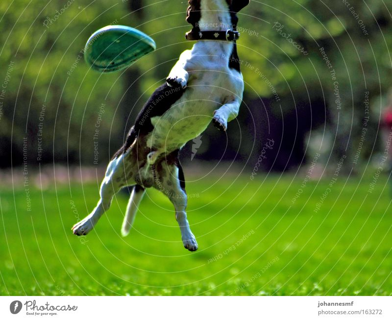 Green Animal Meadow Jump Grass Spring Garden Dog Park Power Force Leisure and hobbies Dynamics Beautiful weather Mammal Paw