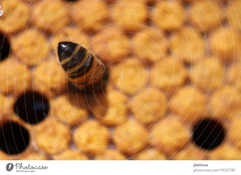 Submerged Food Candy Nutrition Honey Environment Climate Beautiful weather Animal Farm animal Bee 1 Flock Happiness Sustainability Curiosity Honey bee