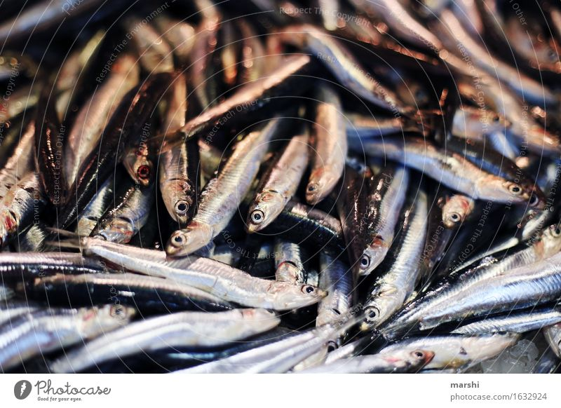 anchovies Animal Dead animal Fish Moody Portugal Markets Sardine Fishy Small Fish market Algarve Delicious Food Nutrition Healthy Eating Food photograph