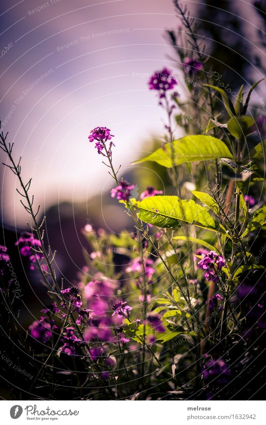 Nature City Plant Beautiful Green Summer Flower Leaf Calm Black Blossom Meadow Dye Grass Style Happy