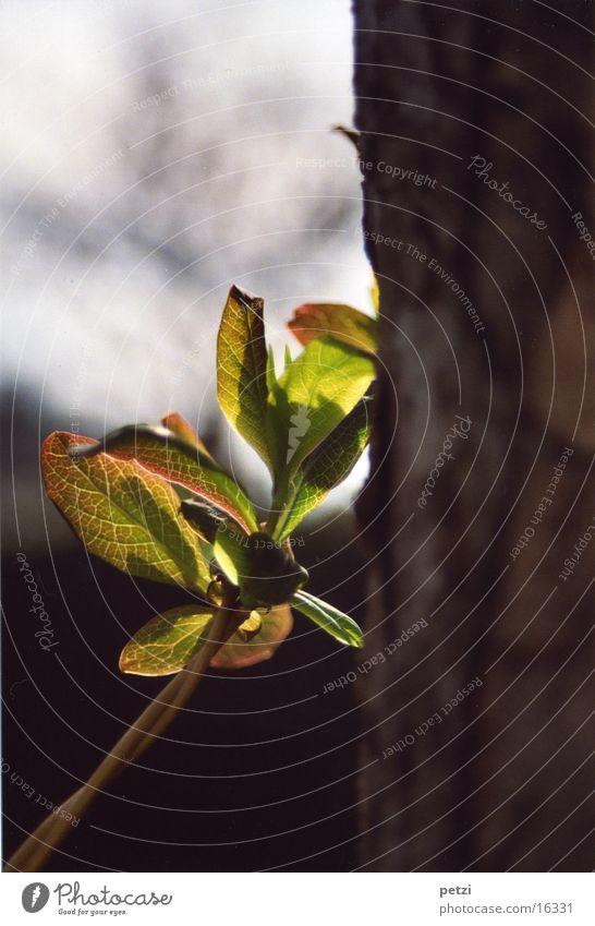 Leaf Bright Fresh New Tree trunk Lean Shoot Shaft of light Bulky