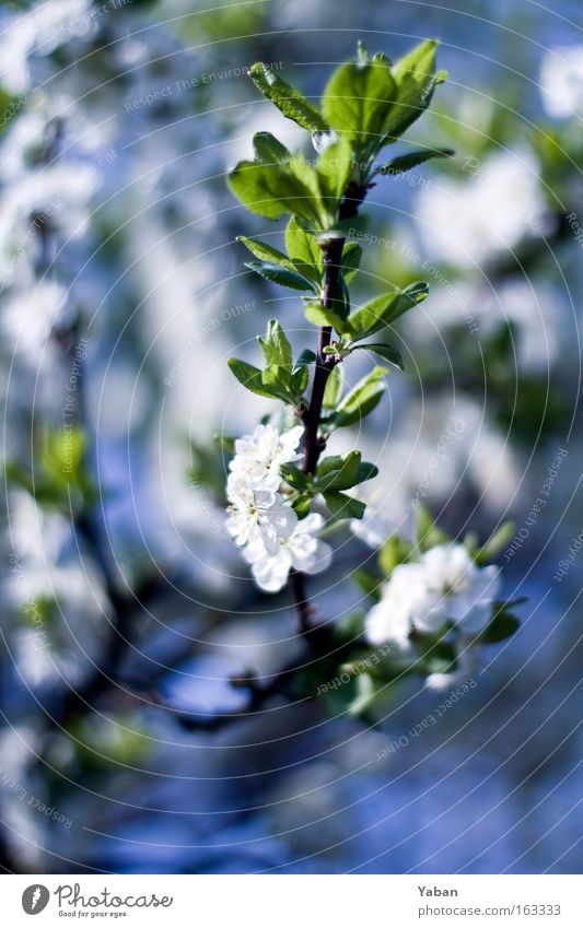 Nature Beautiful White Tree Flower Green Plant Blossom Spring Bright Power Environment Esthetic Growth Authentic Pure