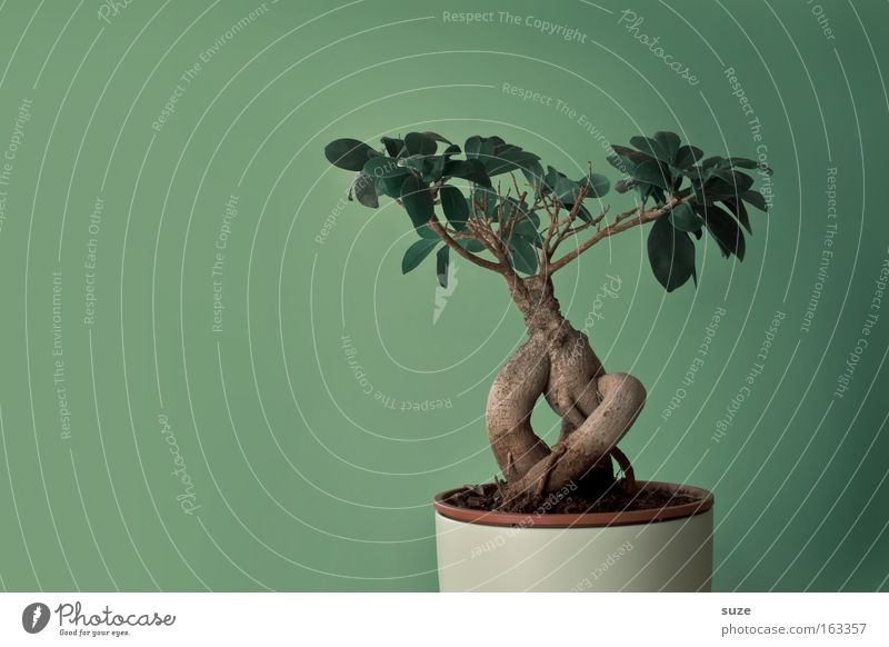 Nature Plant Green Tree Leaf Life Style Small Art Design Contentment Leisure and hobbies Decoration Culture Asia Botany