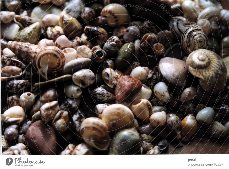 Mussels & Stones Snail Rotated Spiral Pattern displaced shapes speckled