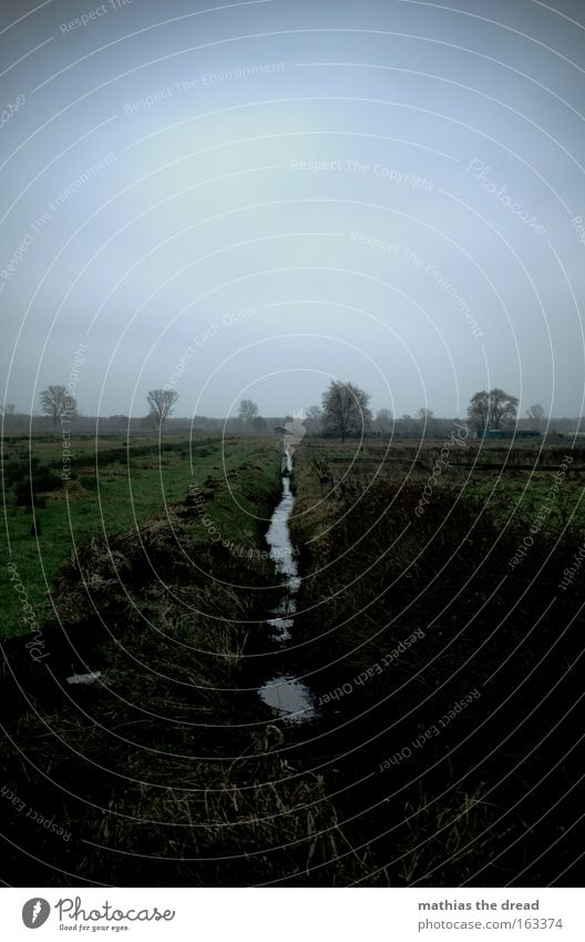 rivulet Pasture Willow tree Willow-tree Field Meadow Green Landscape Nature Water Runlet Flow Sky Covered Dark Gloomy Deserted Tree Gray Autumn Transience Seep