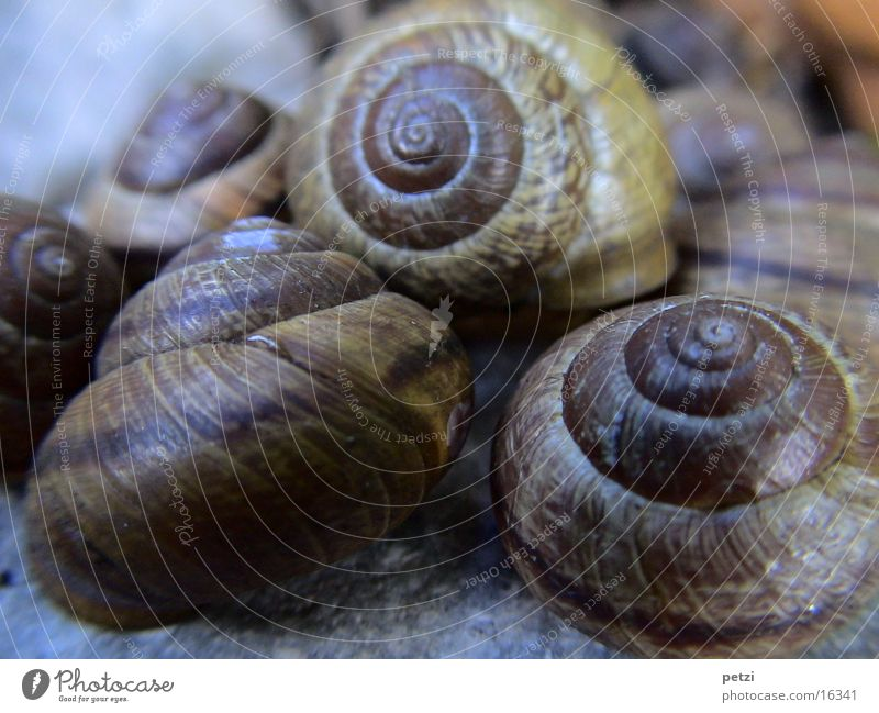 Houses-Snails Multiple Rotated Spiral Brown pub Hut Many Stone Furrow Macro (Extreme close-up) Blur