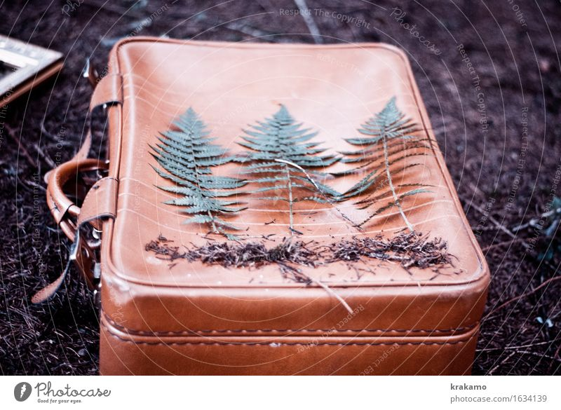 Fern in the woods Freedom Suitcase Vacation & Travel Nature Plant Grass Foliage plant Agricultural crop Wild plant Forest Woodground Infatuation Romance