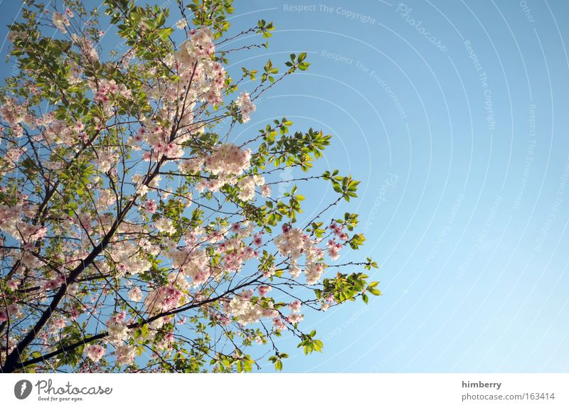 Sky Nature Blue Beautiful Tree Plant Summer Flower Relaxation Spring Freedom Blossom Park Moody Background picture Weather