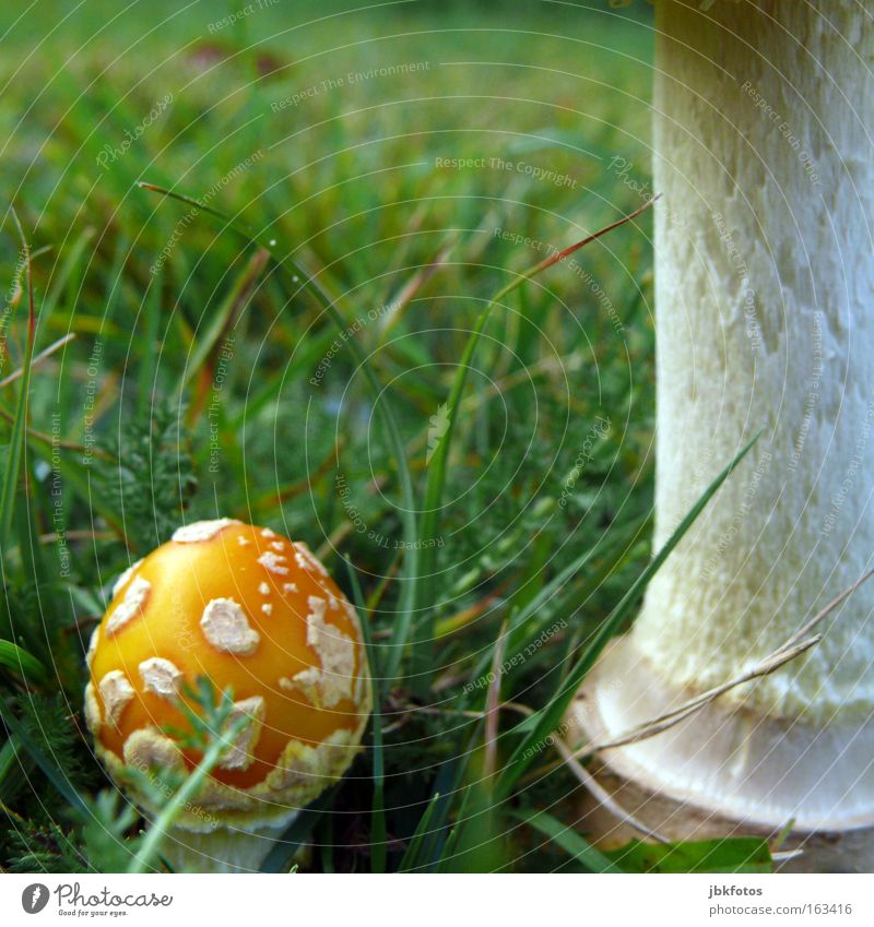Green Red Meadow Autumn Garden Natural Food Nutrition Uniqueness Vegetable Gastronomy Long Stalk Organic produce Dinner Mushroom