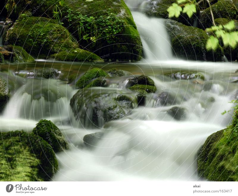 Water Forest River Soft Brook Baden-Wuerttemberg Waterfall Body of water Black Forest Mountain stream