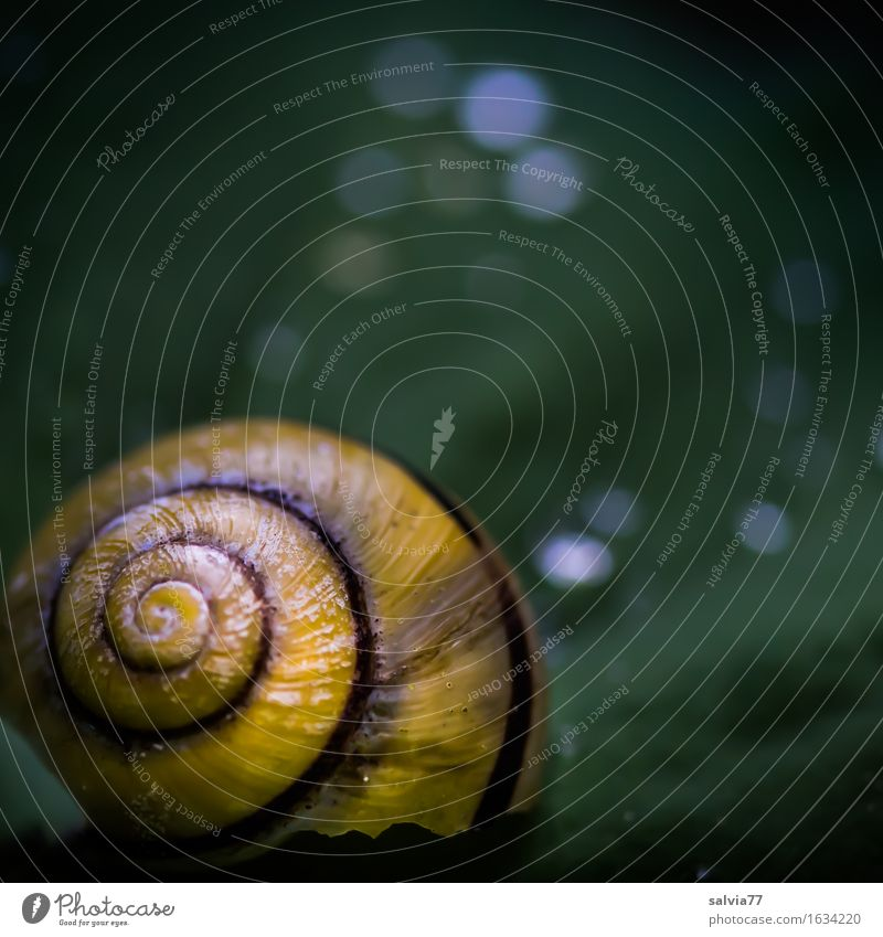 paint damage Nature Plant Animal Water Drops of water Spring Summer Leaf Garden Snail Snail shell 1 Glittering Round Yellow Green Loneliness Design Uniqueness