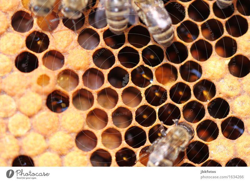 bee brood Food Nutrition Joy Happy Beautiful Personal hygiene Leisure and hobbies Environment Nature Animal Farm animal Wild animal Bee Baby animal
