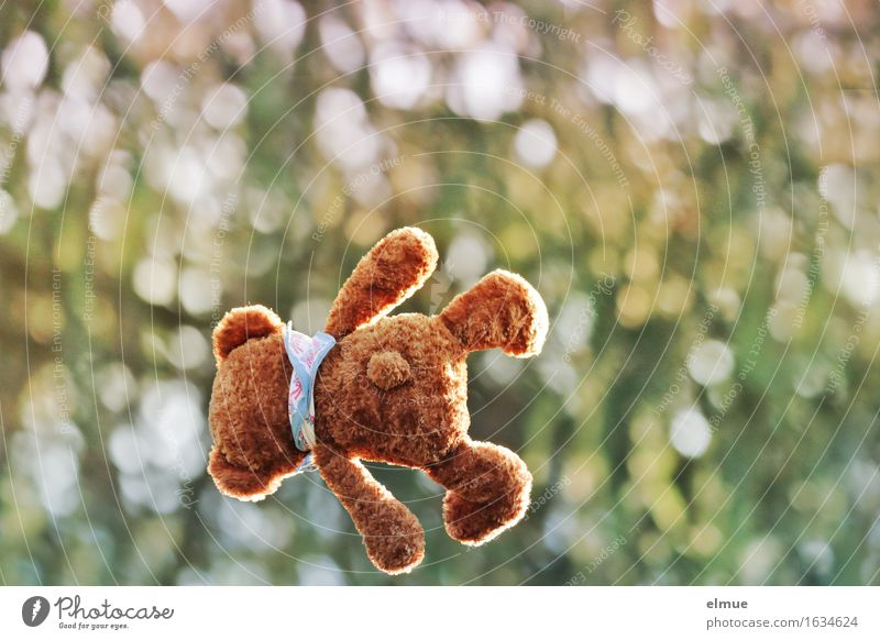Teddy Per as a whirlwind Playing Vacation & Travel Nature Park Teddy bear Cuddly toy Airplane Gravity Movement Flying Jump Above Athletic Joy Happiness