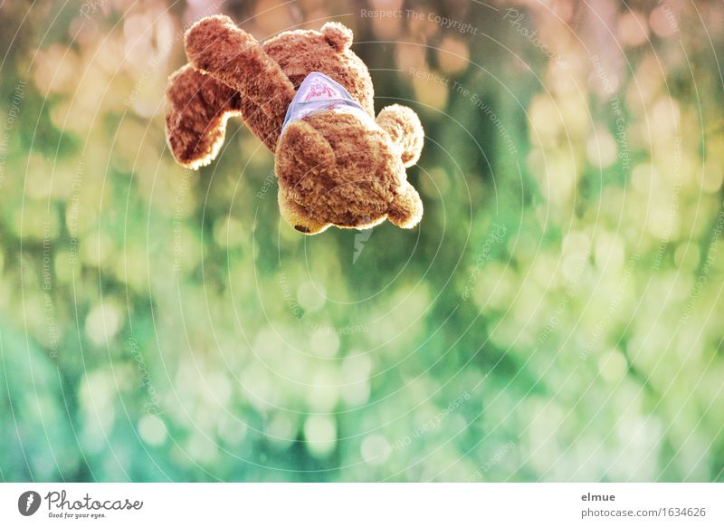 Teddy Per in high flight Playing Freedom Trampoline Nature Teddy bear Flying Fear of flying Movement Athletic Happiness Cuddly Cute Multicoloured Joy Happy