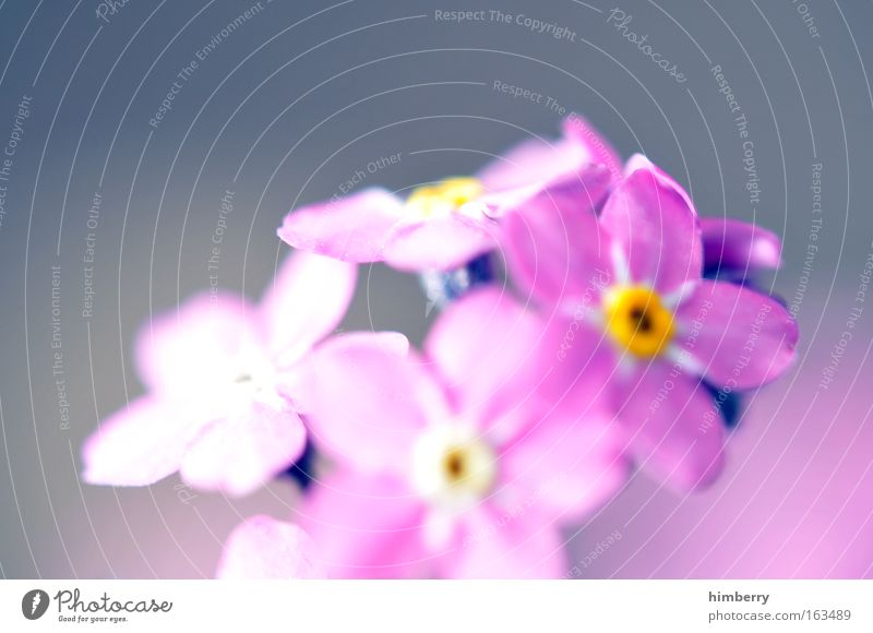 Nature Beautiful Flower Plant Summer Blossom Spring Happy Dream Contentment Pink Hope Happiness Esthetic Cool (slang) Wellness