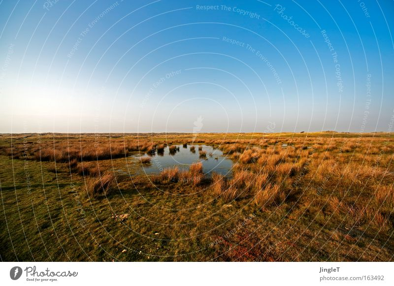 one day all this will be yours... Steppe Grass Landscape Far-off places Water Infinity Sky Longing Brown Blue Green Ameland Island Relaxation Beautiful Spring