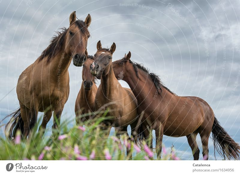 Curiosity II Nature Plant Animal Storm clouds Bad weather Grass colourful flowers Meadow Steppe Pet Farm animal Horse 4 Group of animals Observe Communicate