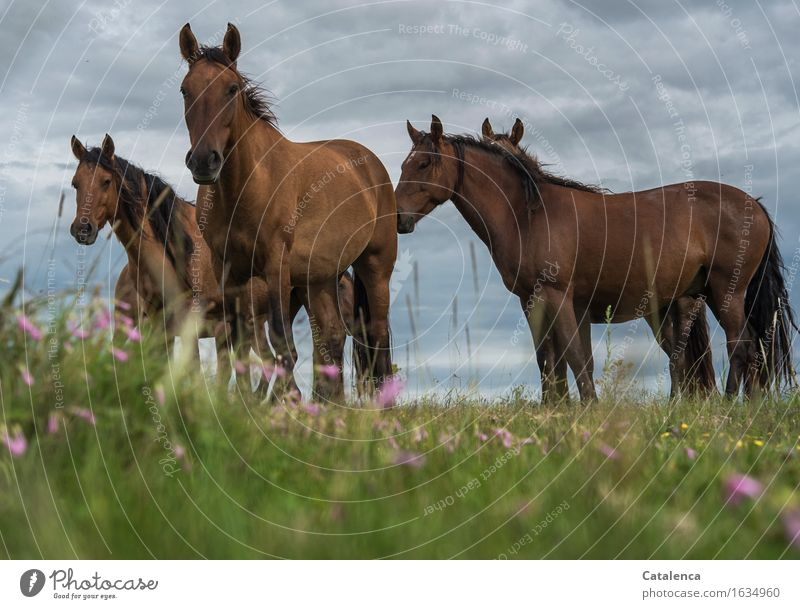 inquisitiveness Nature Plant Animal Storm clouds Bad weather Grass colourful flowers Meadow Steppe Farm animal Horse 4 Group of animals Observe Communicate